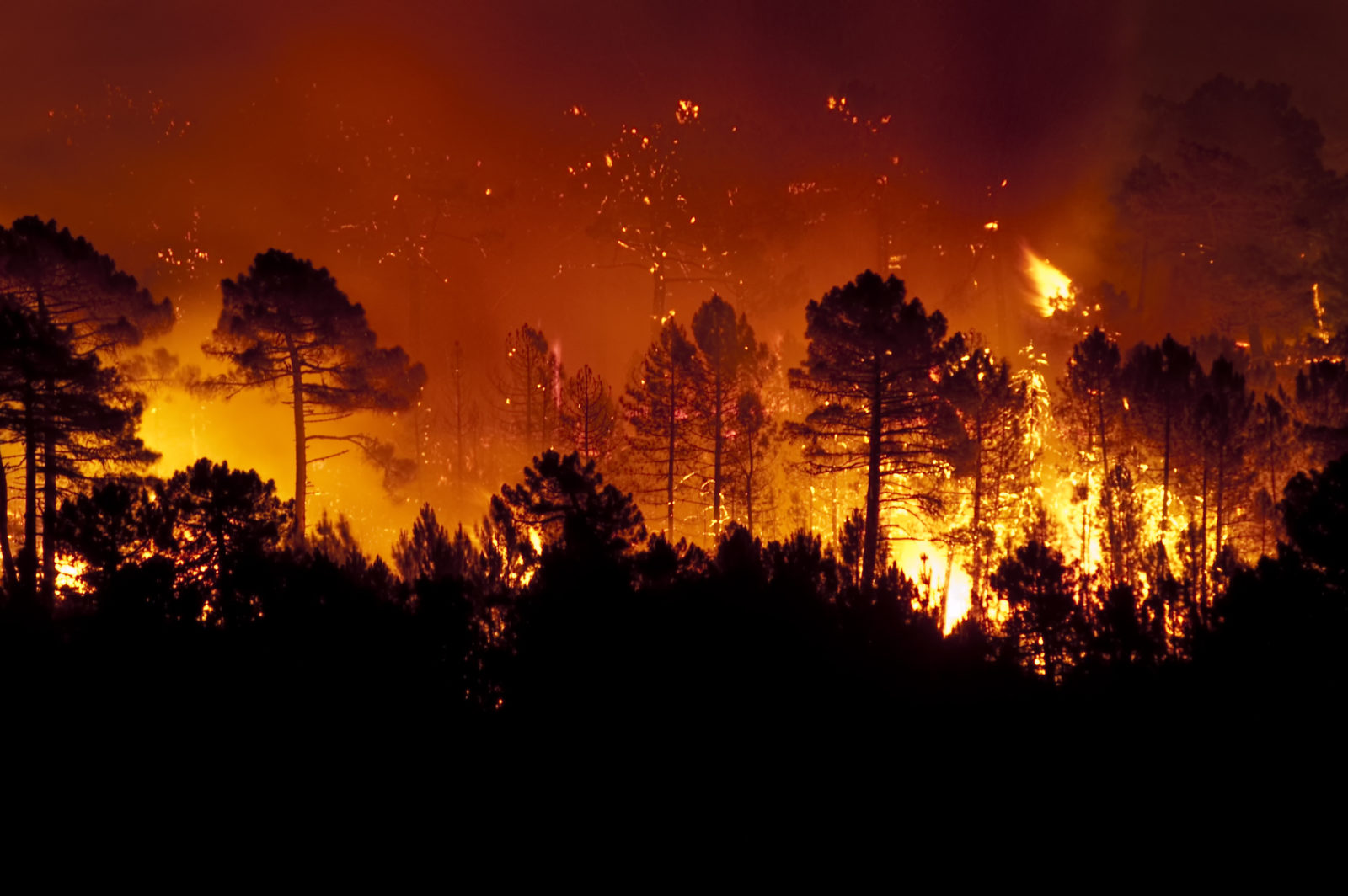 wildfire burning trees