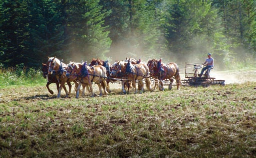Walt Bernard drives a team of draft horses plowing a field.