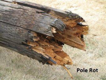 Pole Rot